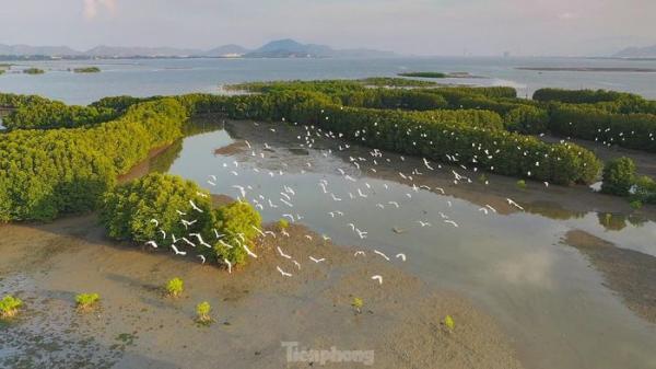 Có một vùng 'sông nước miền Tây' trên đất Bình Định