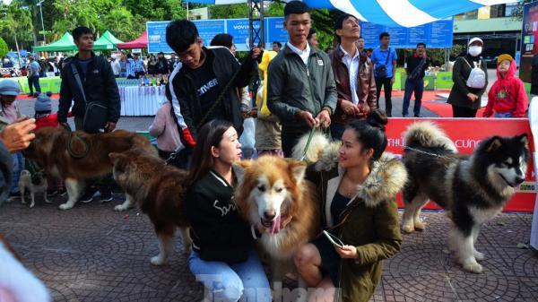Nghìn người mang chó đi tranh giải sắc đẹp ở Đắk Lắk