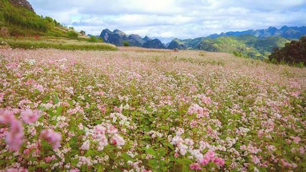 Giới trẻ Buôn Ma Thuột háo hức check-in ở vườn hoa tam giác mạch mới toanh đẹp không kém Tây Bắc