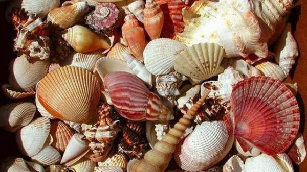 Một người t.ử vo.ng, bảy người ng.u.y k.ị.c.h vì ng.ộ đ.ộ.c khi ăn ốc biển