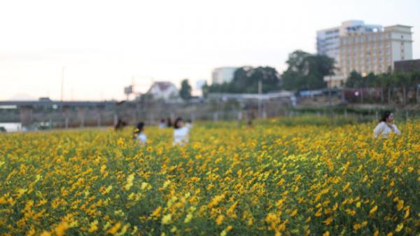"""Rực rỡ sắc hoa bên """"dòng sông chảy ngược"""" ở Kon Tum"""