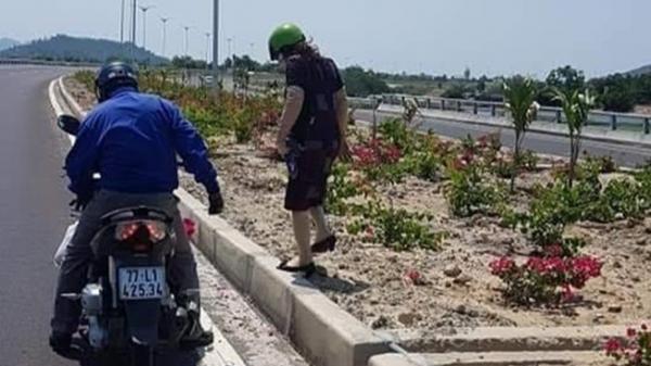 Bình Định: Hơn 3.000 cây hoa giấy trên quốc lộ ngàn tỉ bị lấy trộm