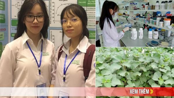 Hai nữ sinh Quảng Ngãi nghiên cứu khả năng kháng đa'i tháo đường của cây lá gai