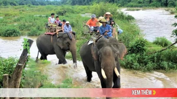 Đắk Lắk: Dừng hoạt động cưỡi voi sau sự cố làm 2 du khách bị thương do ngã