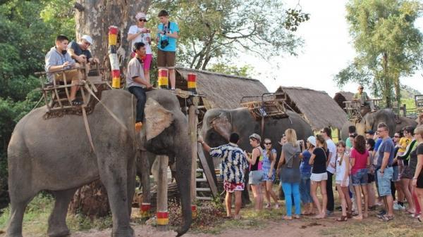 Đắk Lắk chấm dứt du lịch trải nghiệm cưỡi voi để bảo tồn hiệu quả