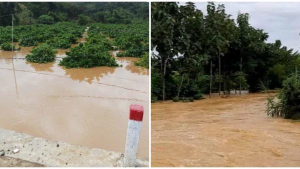 Cận cảnh hình ảnh mưa lũ gây ngập lụt, sạt lở cô lập nhiều vùng ở Đắk Nông