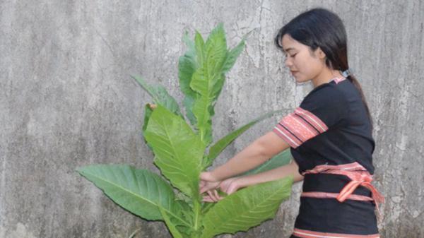 Kon Tum: Cô học trò người dân tộc thiểu số xuất sắc được kết nạp Đảng ở tuổi 18