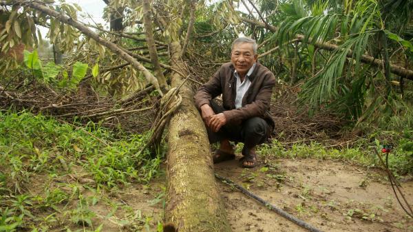 Quảng Ngãi: Nhiều nhà vườn trồng cây ăn trái bị thiệt hại nặng sau mưa bão