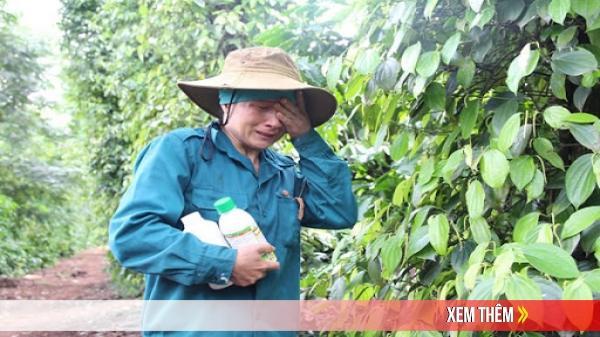 Giá nông sản hôm nay 8/7: Cà phê tăng trở lại, tiêu giảm mạnh ở Gia Lai