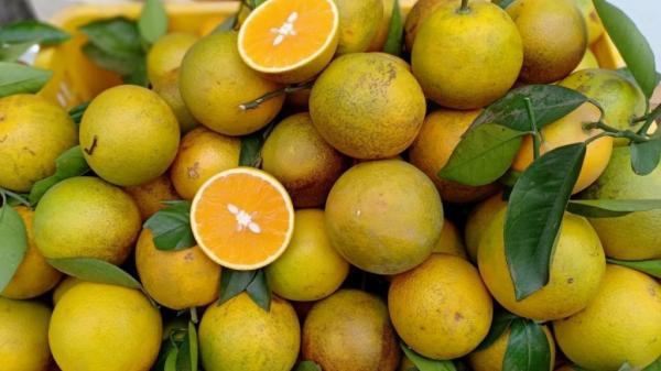 Tiếc tiền hành lý, nhóm 4 người quyết ăn sạch 30kg cam trong nửa tiếng