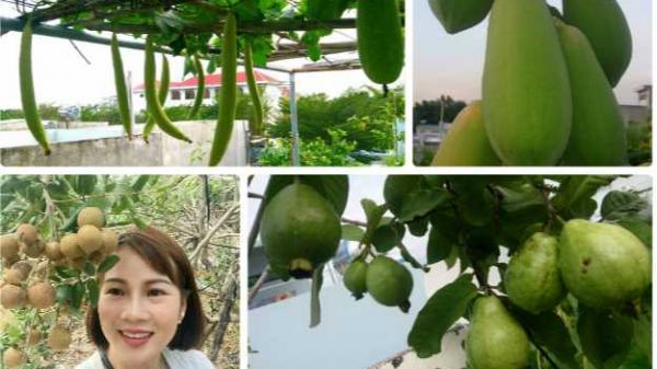 Vũng Tàu: Vườn rau và cây trái tốt tươi trên sân thượng của người phụ nữ đảm đang