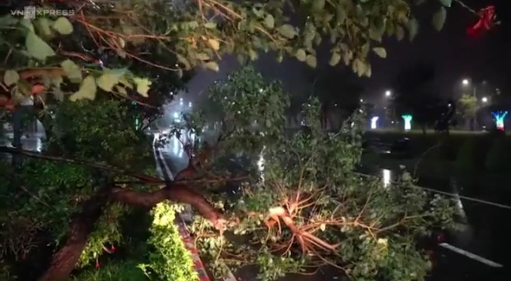 Cây ngã ở trung tâm TP Tuy Hòa. Ảnh cắt từ clip.